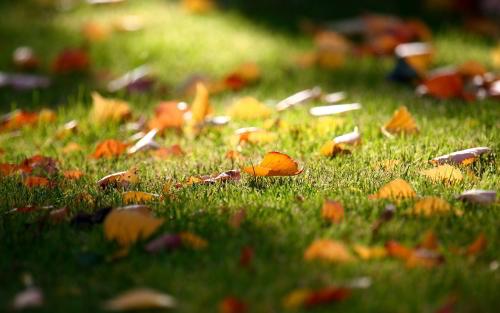 autumn-leaves-garden